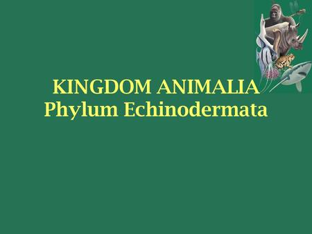 KINGDOM ANIMALIA Phylum Echinodermata. Members of the Phylum Echinodermata Date back 570 million years ago 13,000 fossil species Only 7,000 species today.