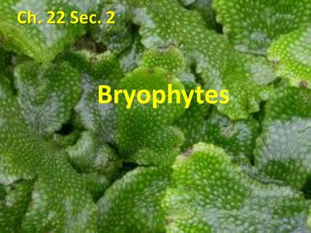 Ch. 22 Sec. 2 Bryophytes. Mosses and their relatives are called bryophytes, or nonvascular plants. Mosses and their relatives are called bryophytes, or.
