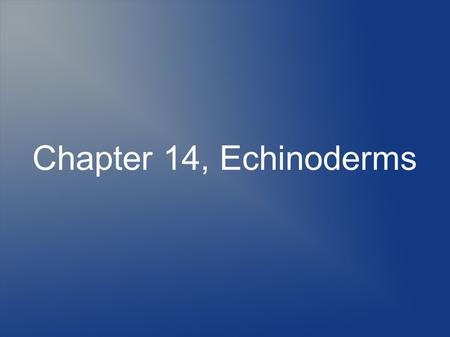 Chapter 14, Echinoderms. Characteristics of Phylum Echinodermata One of the strangest and most unusual of all the phylums in the animal kingdom Echinoderms.