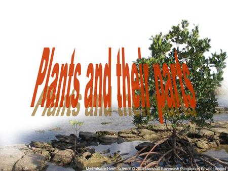 Plants and their parts My Pals are Here! Science © 2008 Marshall Cavendish (Singapore) Private Limited.