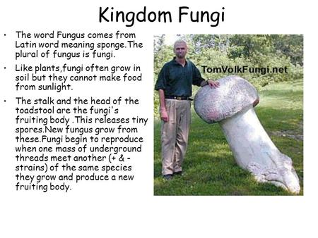 Fungi the word fungus comes from latin word meaning sponge for What does the word soil mean
