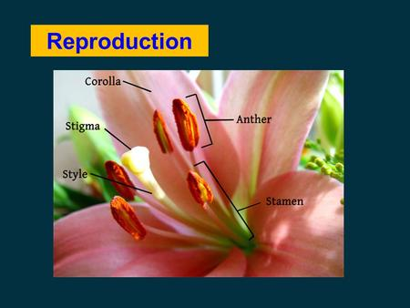 Reproduction.