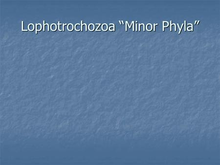 "Lophotrochozoa ""Minor Phyla"""