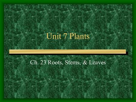 Unit 7 Plants Ch. 23 Roots, Stems, & Leaves.