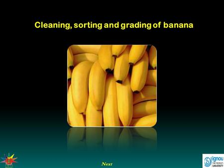 Cleaning, sorting and grading of banana