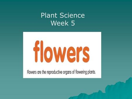 Plant Science Week 5. Flowers are found in many kinds of shapes, colors and petal display.
