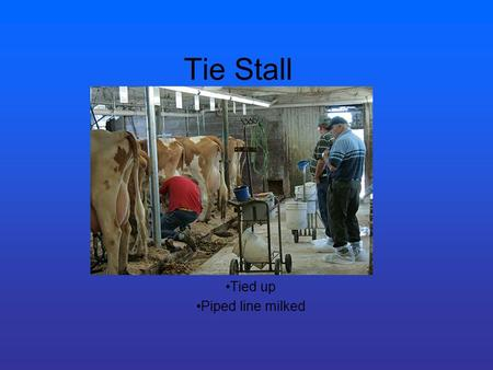Tie Stall Tied up Piped line milked. Stanchion barn Like the tie stall More room to roam (no neck chains)