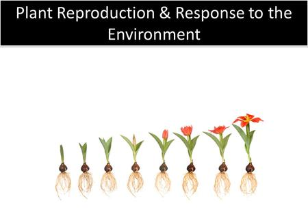 Plant Reproduction & Response to the Environment.