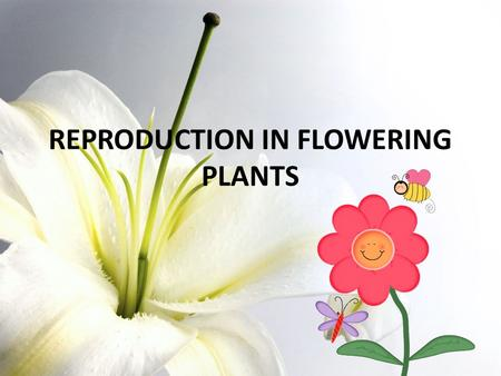 REPRODUCTION IN FLOWERING PLANTS. Let´s play!!! with some riddles…