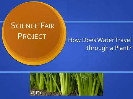 How Does Water Travel through a Plant? S CIENCE F AIR P ROJECT.