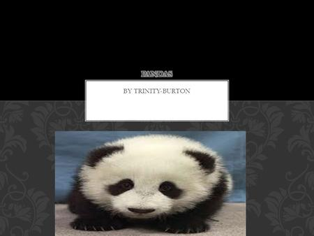 BY TRINITY-BURTON. Pandas have black circles around there eyes. They have black ears. They also have five sharp nails and they have a few sharp teeth.
