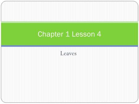 Leaves Chapter 1 Lesson 4. Words to Know Leaf- part of a plant where most of the food is made Veins- Part of the leaf that holds tubes which carry food,