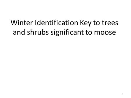 Winter Identification Key to trees and shrubs significant to moose 1.