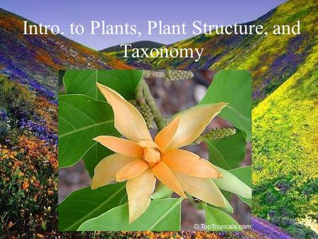 Intro. to Plants, Plant Structure, and Taxonomy. I. Why do we love plants? What makes them so special?