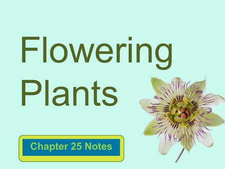 Flowering Plants Chapter 25 Notes.