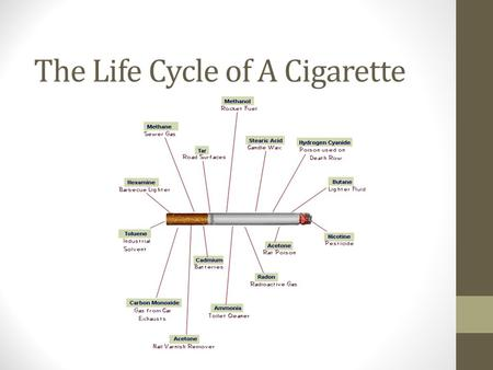 The Life Cycle of A Cigarette. Extraction Main component- tobacco Nicotiana tabacum, or cultivated tobacco Nicotiana rustica, or wild tobacco Mainly grown.