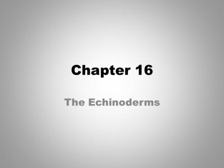Chapter 16 The Echinoderms.