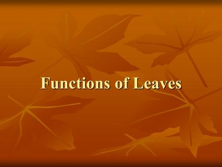 Functions of Leaves. Congratulations! You have all been selected as the new, up and coming marketing firm responsible for the new campaign slogans for.