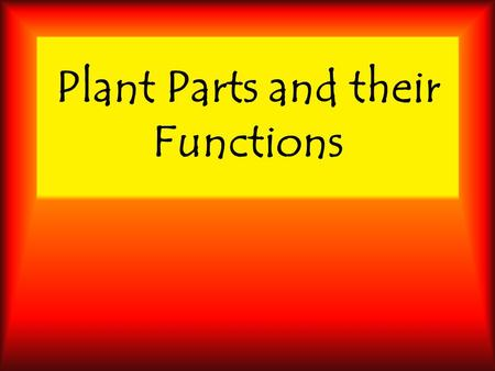 Plant Parts and their Functions. Apex Tip of leaf.