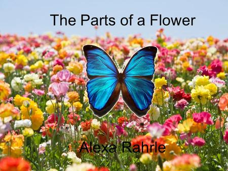 The Parts of a Flower Alexa Rahrle. Now, each part of a flower has it's own function! Let's see what each part does!
