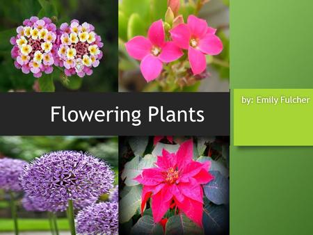 Flowering Plants by: Emily Fulcher.