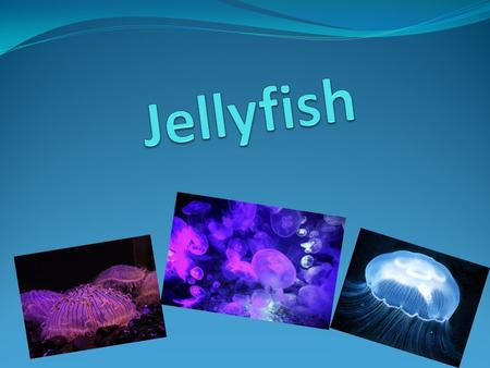 What is jellyfish? Jellyfish or jelliesare the major non-polyp form of individuals of the phylum Cnidaria. They are typified as free-swimming marine animals.