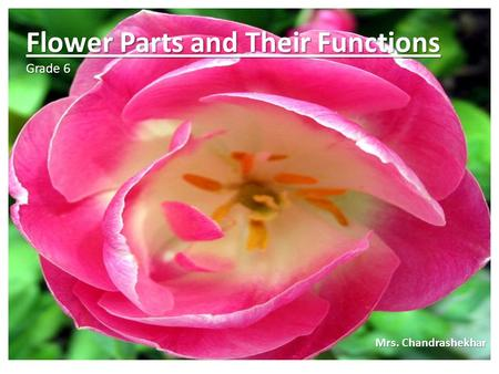 Flower Parts and Their Functions Grade 6 Mrs. Chandrashekhar.