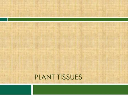 PLANT TISSUES. Seed plants have 3 principle organs  1. Roots—absorb water and dissolved nutrients, anchor the plant to ground  2. Stems—is a support.