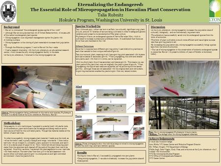 Eternalizing the Endangered: The Essential Role of Micropropagation in Hawaiian Plant Conservation Talia Rubnitz Hokule ʻ a Program, Washington University.
