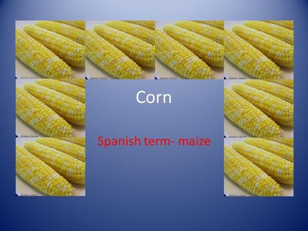 Corn Spanish term- maize. The plant A leafy stalk that produces ears which contain the grain.