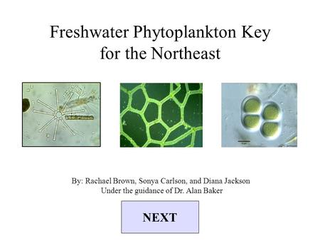 Freshwater Phytoplankton Key for the Northeast By: Rachael Brown, Sonya Carlson, and Diana Jackson Under the guidance of Dr. Alan Baker NEXT.