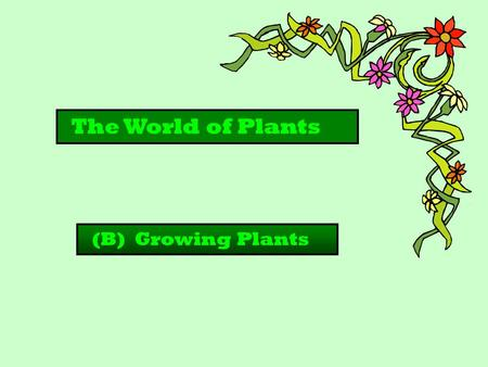 The World of Plants (B) Growing Plants.