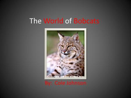 The World of Bobcats By: Cole Johnson. What do bobcats look like? A bobcats' fur is short. It is yellowish or reddish brown with black spots. It has a.