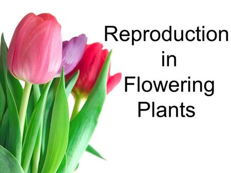Reproduction in Flowering Plants. Principle Parts of Flowers Reproductive organs are in structures called Flowers Many Flowers contain male and female.