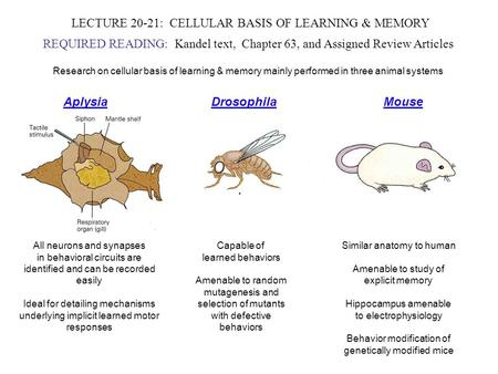 LECTURE 20-21: CELLULAR BASIS OF LEARNING & MEMORY REQUIRED READING: Kandel text, Chapter 63, and Assigned Review Articles Research on cellular basis of.