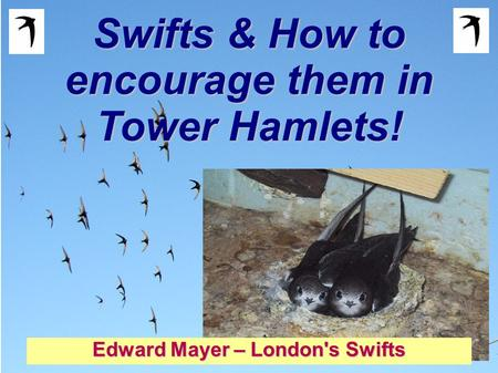 Swifts & How to encourage them in Tower Hamlets! Edward Mayer – London's Swifts.