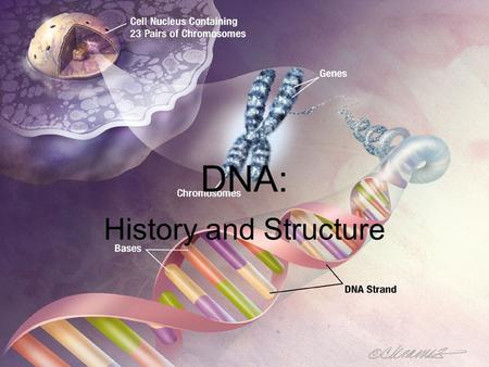 DNA: History and Structure. A Brief History of DNA (deoxyribonucleic acid): –Discovery of DNA by many different scientists –1928 – Griffith – studied.