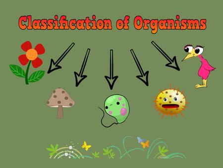 Why do we classify organisms? 1.Help us to organize organisms so that they can be easily found and determine their similarities and differences. 2. Identify.