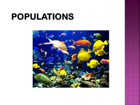A population is a group of organisms of the same species that live in a specific geographical area and interbreed. A population is a reproductive group.