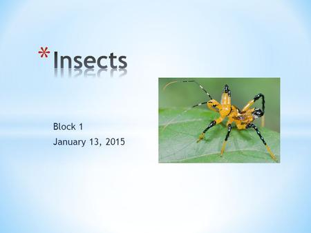 Insects Block 1 January 13, 2015.