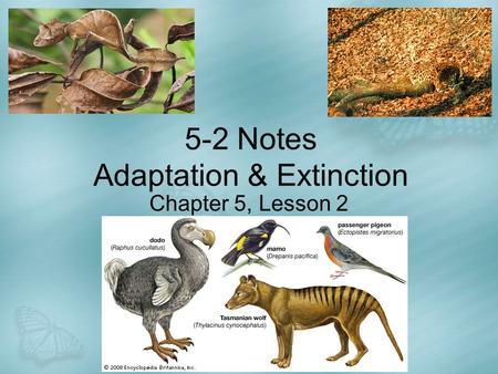5-2 Notes Adaptation & Extinction