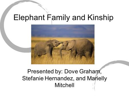 Elephant Family and Kinship Presented by: Dove Graham, Stefanie Hernandez, and Marielly Mitchell.