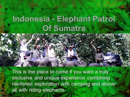 Indonesia - Elephant Patrol Of Sumatra This is the place to come if you want a truly exclusive and unique experience combining rainforest exploration with.