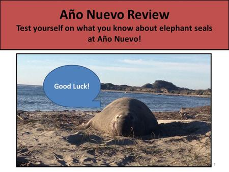 Año Nuevo Review Test yourself on what you know about elephant seals at Año Nuevo! 1 Good Luck!