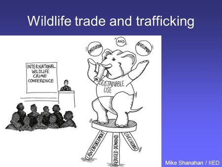 Wildlife trade and trafficking Mike Shanahan / IIED.