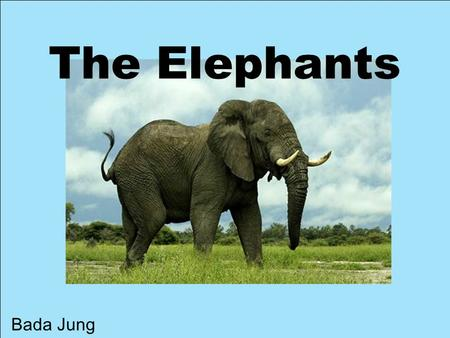 The Elephants Bada Jung.