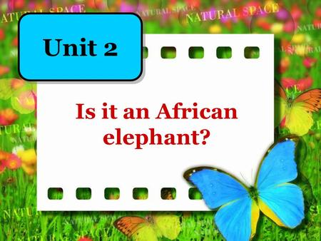 Is it an African elephant? Unit 2. Continents in the world Asia Europe Africa Oceania South America North America.