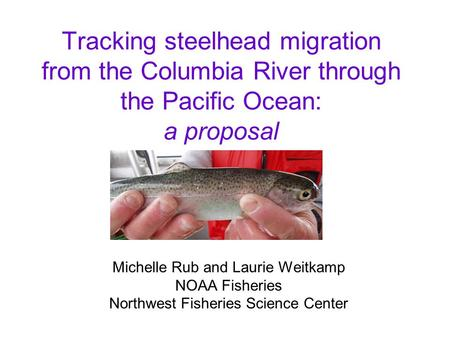 Tracking steelhead migration from the Columbia River through the Pacific Ocean: a proposal Michelle Rub and Laurie Weitkamp NOAA Fisheries Northwest Fisheries.
