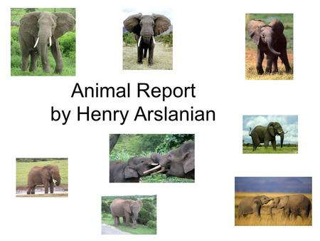 Animal Report by Henry Arslanian. Life Cycle The elephant goes threw a incomplete metamorphosis. This is when it just gets bigger and doesn't go through.