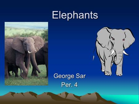Elephants Elephants George Sar Per. 4. Basic Information Elephants are a family in the order Proboscidea in the class Mammalia. There are three living.